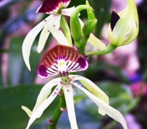 botanical-gardens-belize