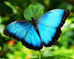 butterfly-farm